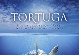 Tortuga: Die unglaubliche Reise der Meeresschildkröte...lakat