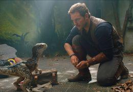 Jurassic World - Das gefallene Königreich - Chris Pratt