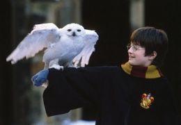 Harry Potter und der Stein der Weisen - Daniel Radcliffe